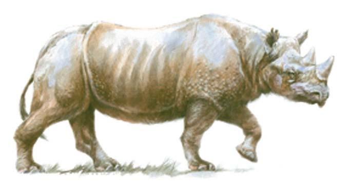 Q De Rhino Merck, étrusque, ...